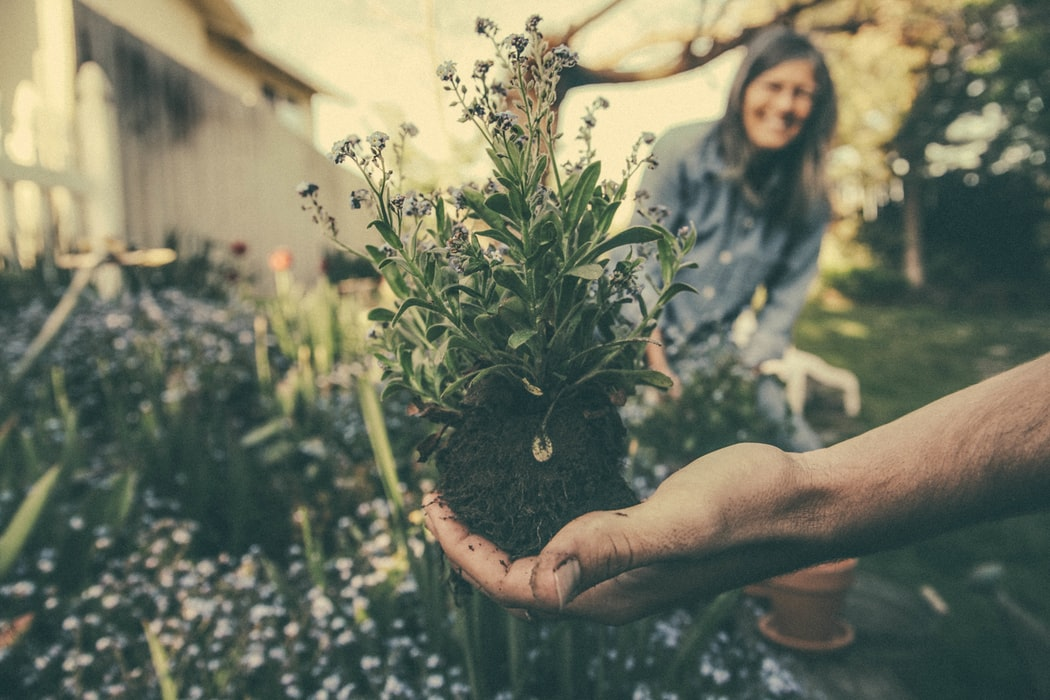 Travis Cadman – Falling in Love With Gardening