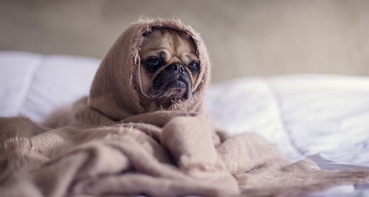 All Creatures Veterinary Center – Helping Your Dog With Separation Anxiety