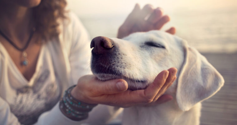 Fun for Fido: 3 Benefits of CBD for Dogs
