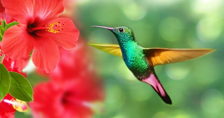 What Is the Best Way to Attract Hummingbirds to Your Yard?