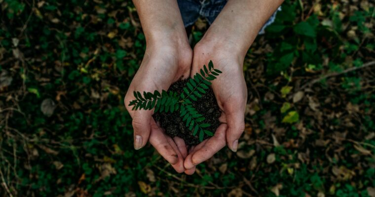 The Importance of Eco-friendly Living